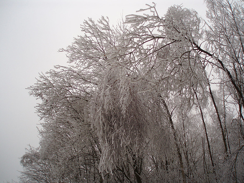 icy snowy trees
