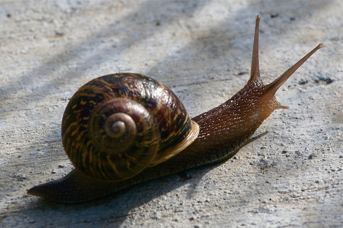 Snail's Pace by Randy son of Robert on flickr